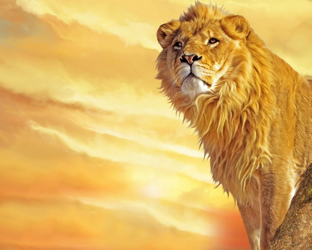 animals_beasts_lion_king_of_beasts_005339_
